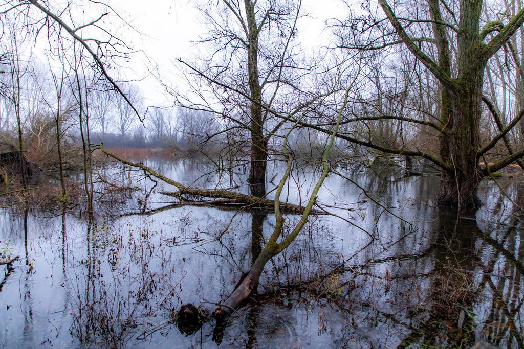 JT-181230-018 | Das Naturschutzgebiet Bislicher Insel, bei Xanten am Niederrhein,