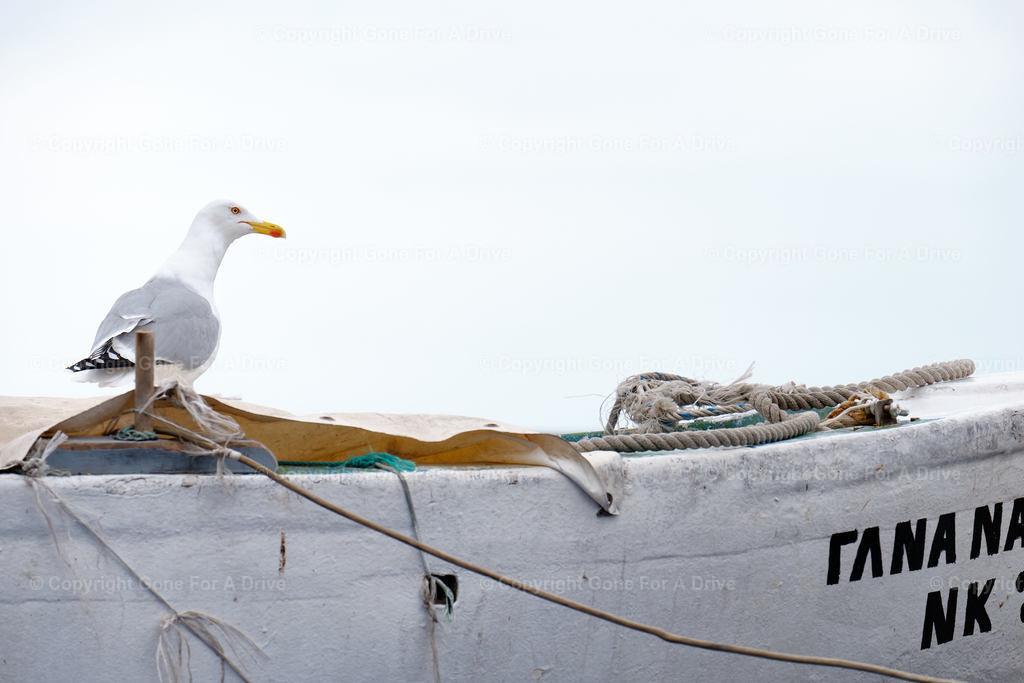 Griechenland | Möwe auf einem Fischerboot