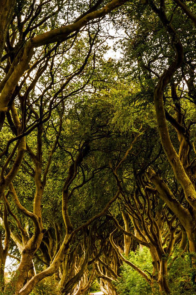 Ireland-Dark Hedges HF