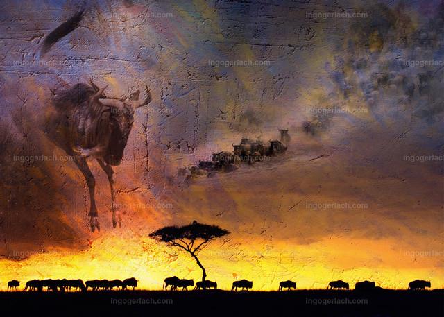 african dreams13
