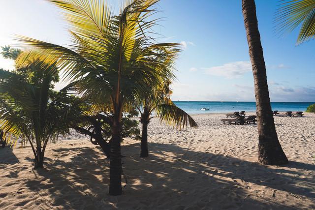 Take me to the beach | Palmenstrand in Trou aux Biches auf Mauritius im indischen Ozean