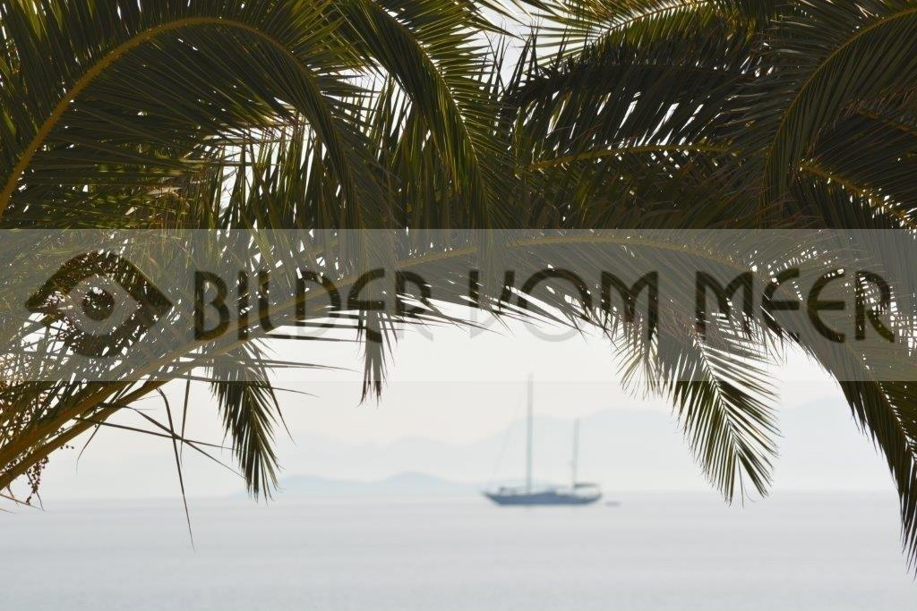Segelschiff unter Palmen am Meer   Bilder vom Meer