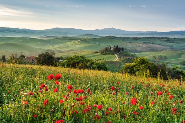 Frühling in der Toskana | Langsam kommt die Sonne empor und die ersten Strahlen treffen auf die Landschaft und die Wiese mit den Mohnblumen im Vordergrund. Eine malerische Szene in einer der schönsten Gegenden der Toskana.