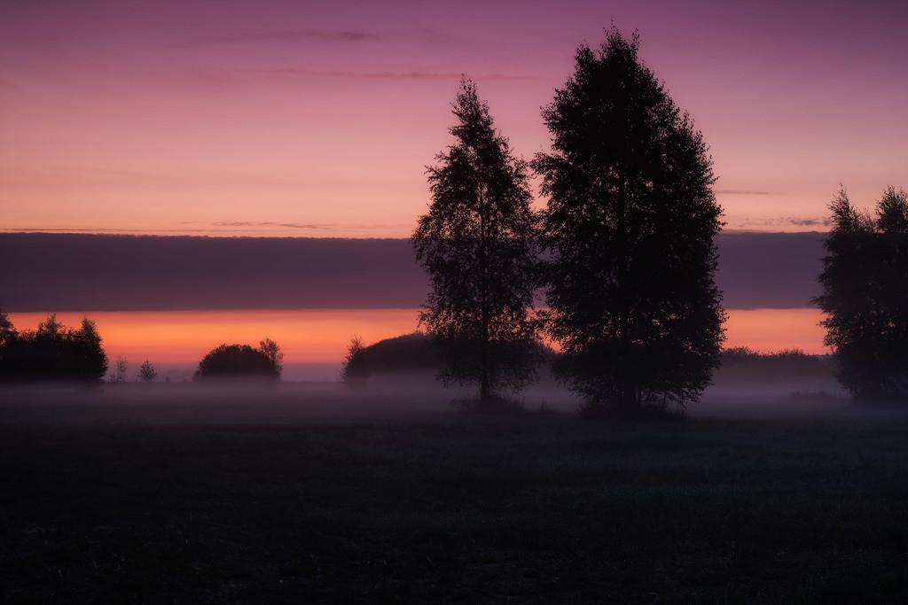 Bei Sonnenaufgang in den Wiesen | Tolle Morgenstimmung in den Hammewiesen.