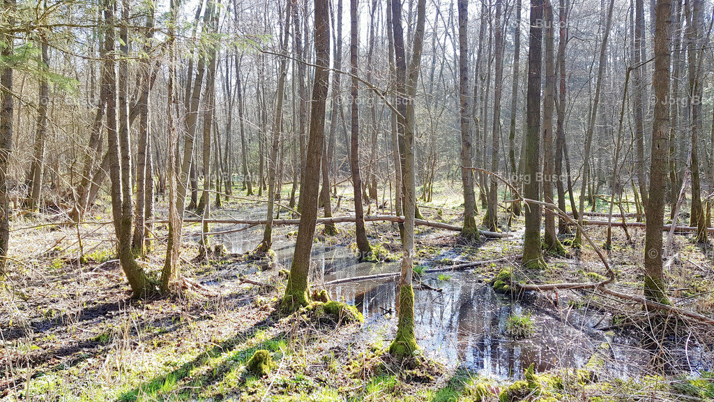 Wald_17
