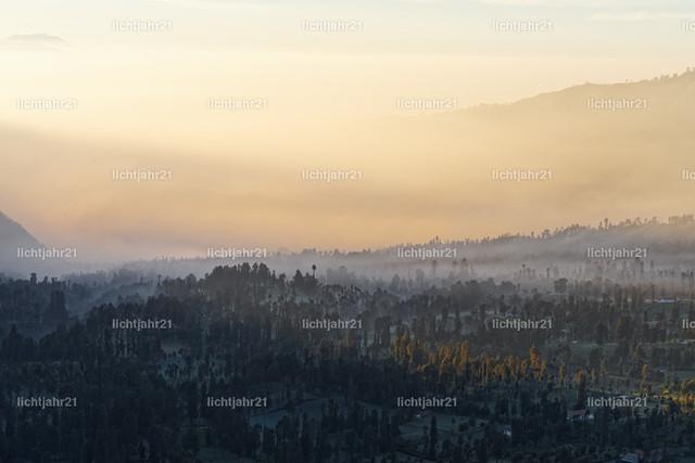 Indonesien - Nebelstimmung auf Hochebene bei Sonnenaufgang | Nebelstimmung auf der Hochebene am Vulkan Mt. Bromo bei Sonnenaufgang, Nebelschwaden zwischen Bäumen, erste Sonnenstrahlen bahnen sich ihren Weg - Location: Indonesion, Insel Java, Gunung Bromo, Nationalpark