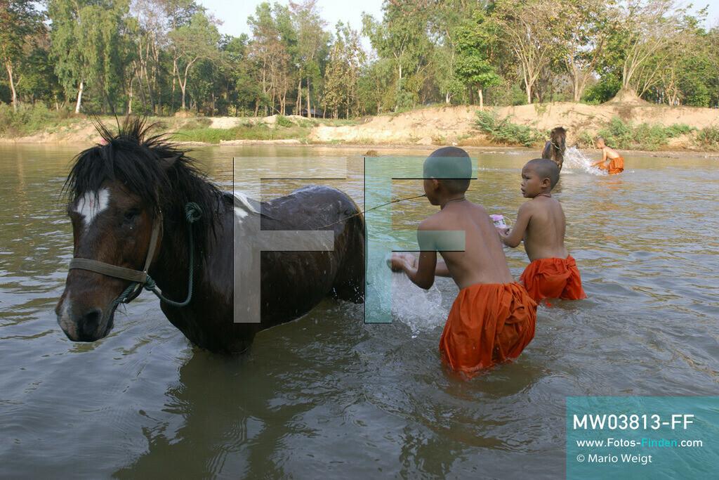 MW03813-FF | Thailand | Goldenes Dreieck | Reportage: Buddhas Ranch im Dschungel | Junge Mönche wäschen im Fluss ihre Pferde.  ** Feindaten bitte anfragen bei Mario Weigt Photography, info@asia-stories.com **