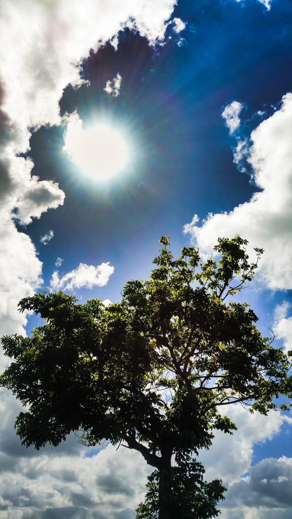 Platz nach oben | Sich ausbreiten wie ein Baum, Erde fühlen, Kraft spüren, dem Licht zuwenden, Sonne atmen, mit Freude leben. Else Pannek