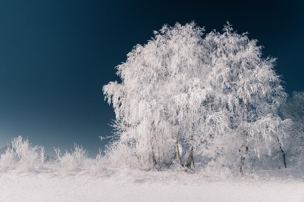 Eisbaum   Vereister Baum im Ennstal.
