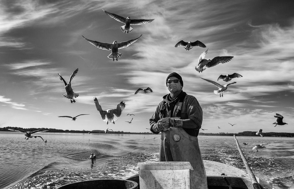 Matthias Nanz – ein Fischer an der Schlei © Holger Rüdel   Matthias Nanz aus Schleswig ist einer der letzten Berufsfischer an der Schlei. Bei seinen Fangfahrten - hier Ende April auf der Großen Breite der Schlei - sind hungrige Möwen häufige Begleiter, immer in der Hoffnung auf Fischabfälle wie in diesem Fall Innereien ausgenommener Heringe.