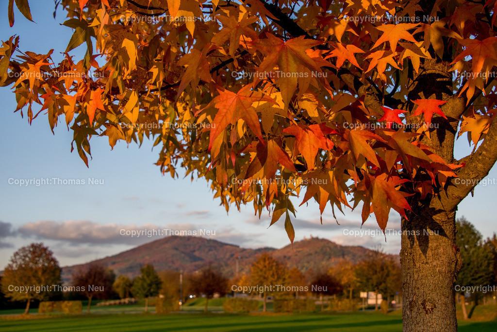 Herbst_Panorama | Bensheim,Panorama Bergstrasse, herbstliche Baumfaerbung am Berliuner Ring, ,, Bild: Thomas Neu