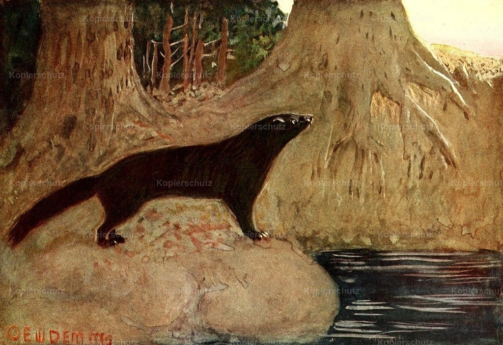 Deming_ E.W. (1860-1942) - American Animal Life 1916 - Mink