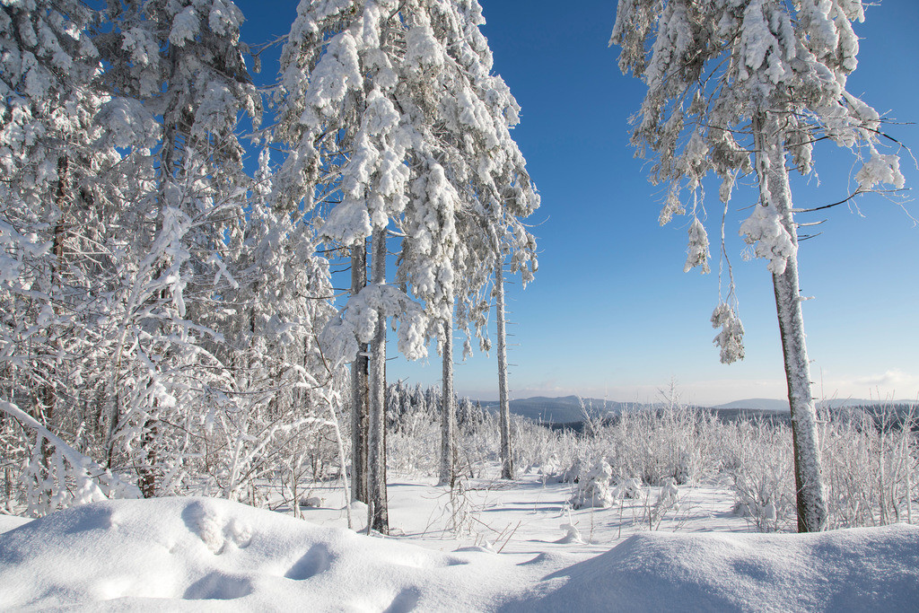 JT-170116-137 | Winter auf dem Kahlen Asten, Sauerland, höchster Berg in NRW, tief verschneite Landschaft