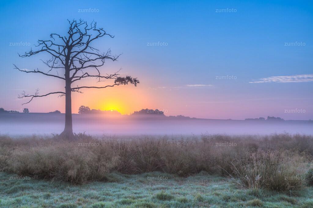 0-150822_0619-0592-99   --Dateigröße 5760 x 3840 Pixel-- Sonnenaufgang mit totem Baum auf Koppel im Nebel.
