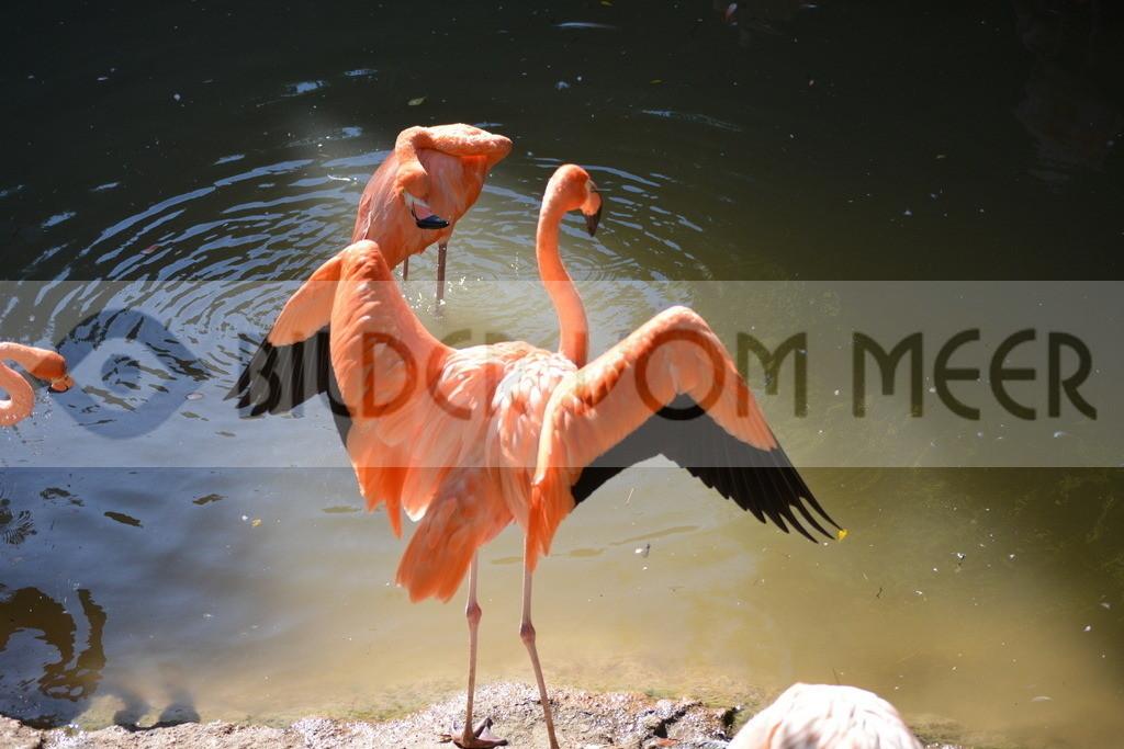 Flamingo Art Bilder   Red Flamingo Art Bilder