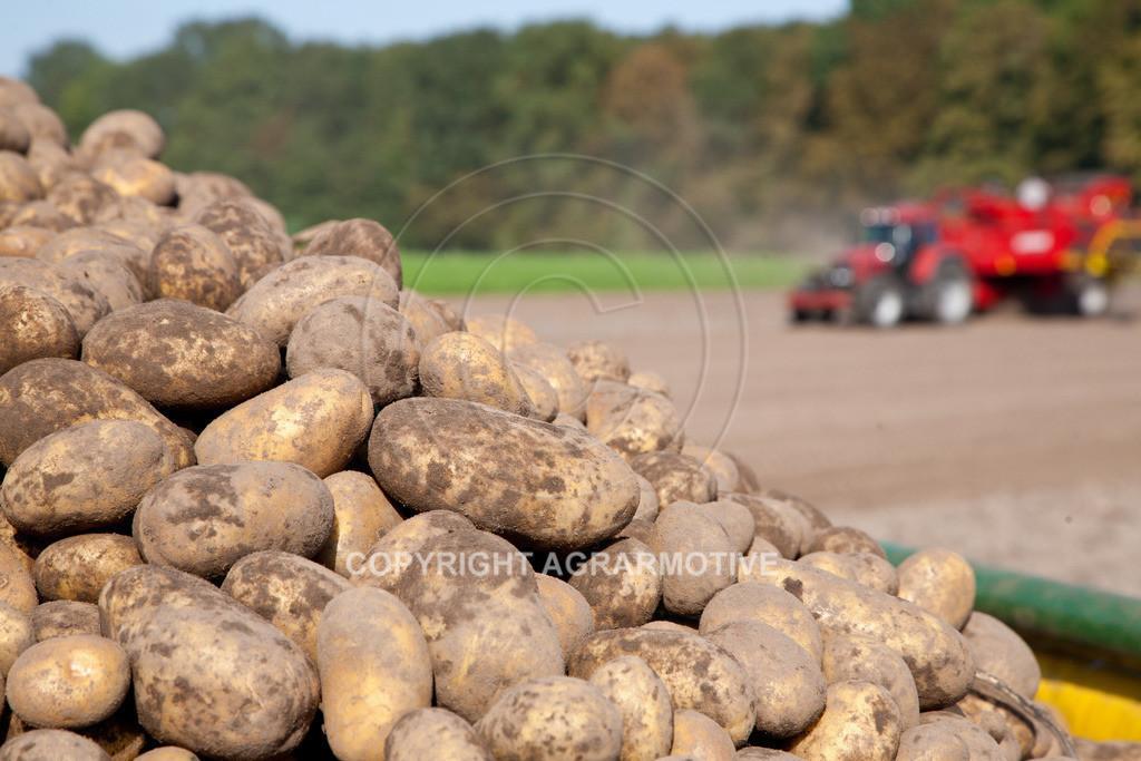 20110929-IMG_5952 | Ernte auf einem Kartoffelfeld - AGRARBILDER