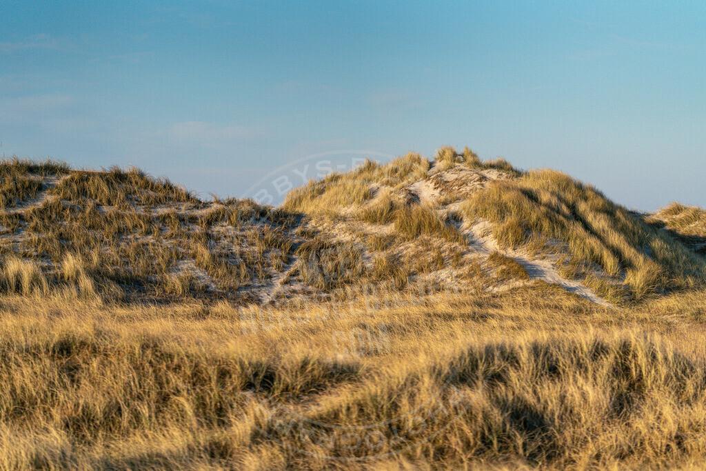 _MGB3101 | Dünenlandschaft am Hungerhamm
