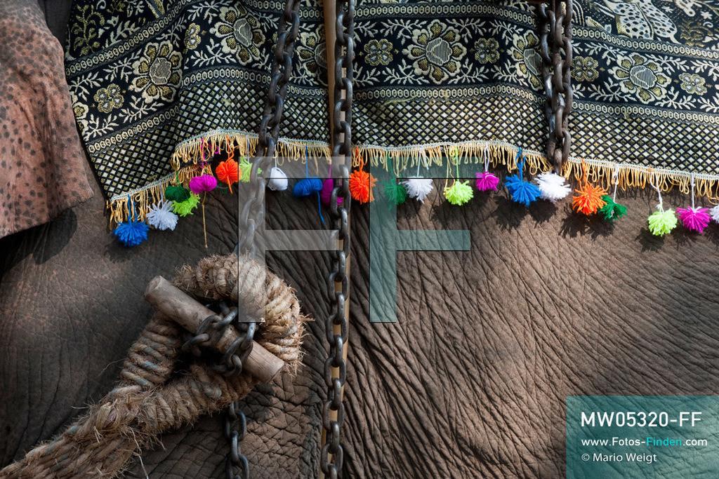 MW05320-FF | Laos | Provinz Sayaboury | Vieng Keo | Reportage: Pey Wan im Elefantendorf | Die Mahuts (Elefantenführer) schmücken ihre Arbeitselefanten für das Fest.  Der achtjährige Pey Wan lebt im Elefantendorf Vieng Keo im Nordwesten von Laos. Im Dorf wohnen ca. 500 Leute mit 17 Arbeitselefanten. Sein Vater Hom Peng hat einen 31 Jahre alten Elefantenbullen namens Boun Van, mit dem er im Holzfällercamp im Dschungel arbeitet. Zum Elefantenfest schmückt Pey Wan den Jumbo und darf mit ihm an der Prozession durchs Dorf teilnehmen. Pey Wan möchte, wie sein Vater, später auch Elefantenführer werden.   ** Feindaten bitte anfragen bei Mario Weigt Photography, info@asia-stories.com **