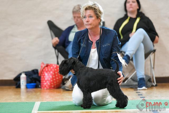 Schnauzer und Pinscher Clubschau   Schnauzer und Pinscher Clubschau in Wangen an der Aare 02.09.2018. Foto: Leo Wyden
