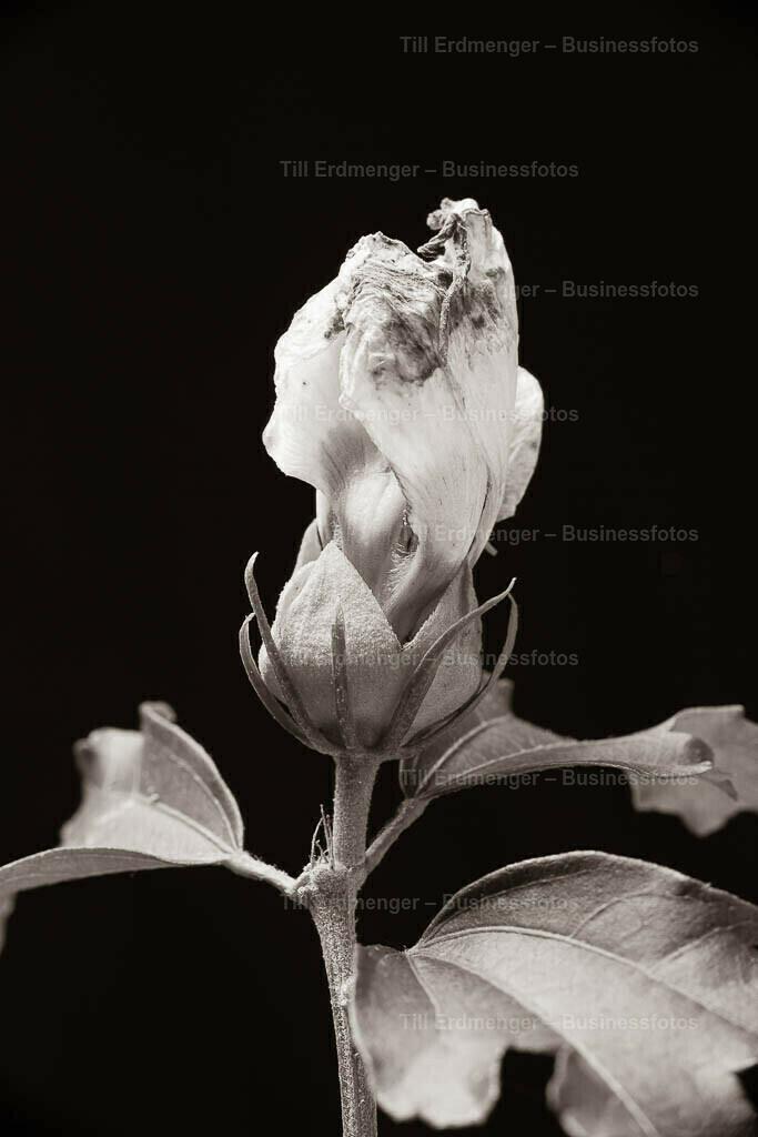 20190909_Herbstblüten_0082