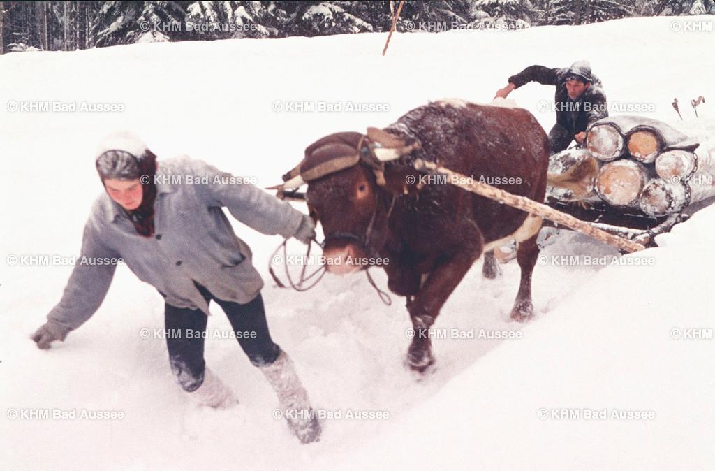 Pirker_2 | Der Holztranport im Winter ist Schwerarbeit für Mensch und Tier