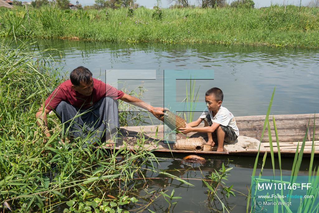 MW10146-FF   Myanmar   Inle-See   Nyaungshwe   Reportage: Ye Lin lebt auf dem Inle-See   Ye Lin überprüft mit seinem Onkel Ko Thein Tun die Reusen. Der 8-jährige Ye Lin Yar Zar lebt mit seinen Eltern in einem Pfahlhaus auf dem Inle-See. Er gehört zur ethnischen Gruppe der Intha und beherrscht die einzigartige Einbeinrudertechnik, um zur Schule zukommen.  ** Feindaten bitte anfragen bei Mario Weigt Photography, info@asia-stories.com **