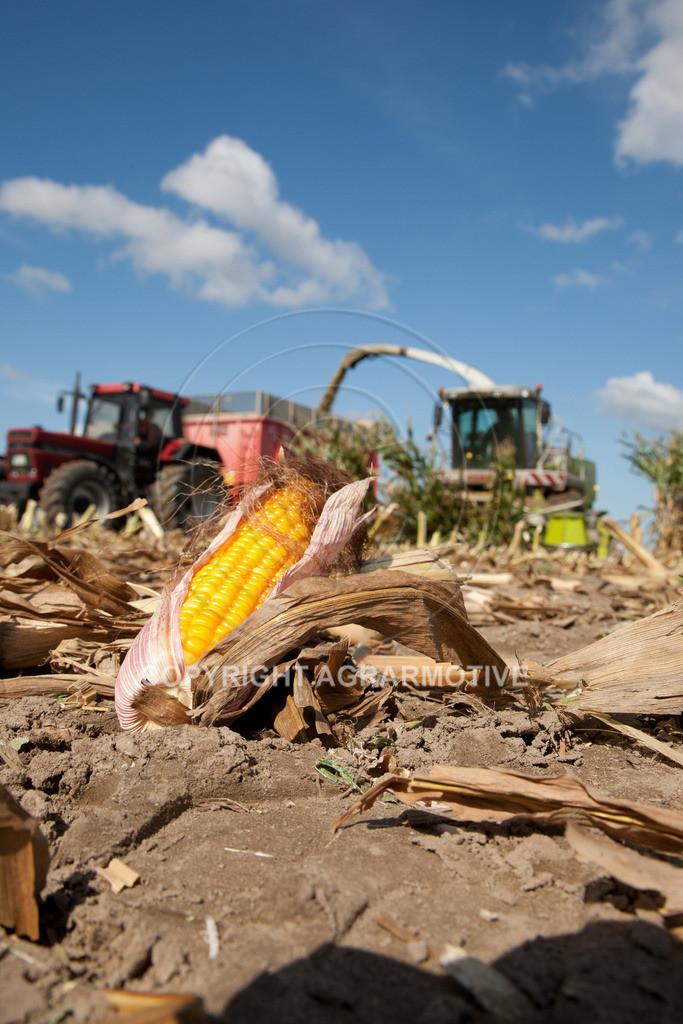 20080914-IMG_9016 | Silomais wird gehäckselt - AGRARFOTO Bilder aus der Landwirtschaft