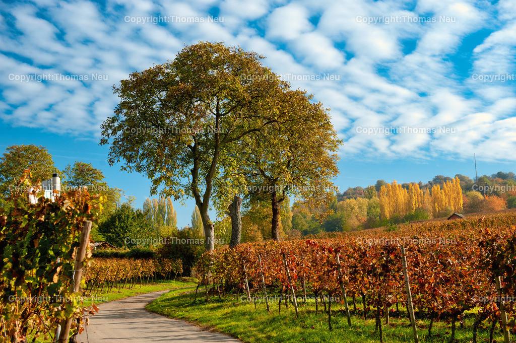 Herbst_Weinberge | ,, Bild: Thomas Neu