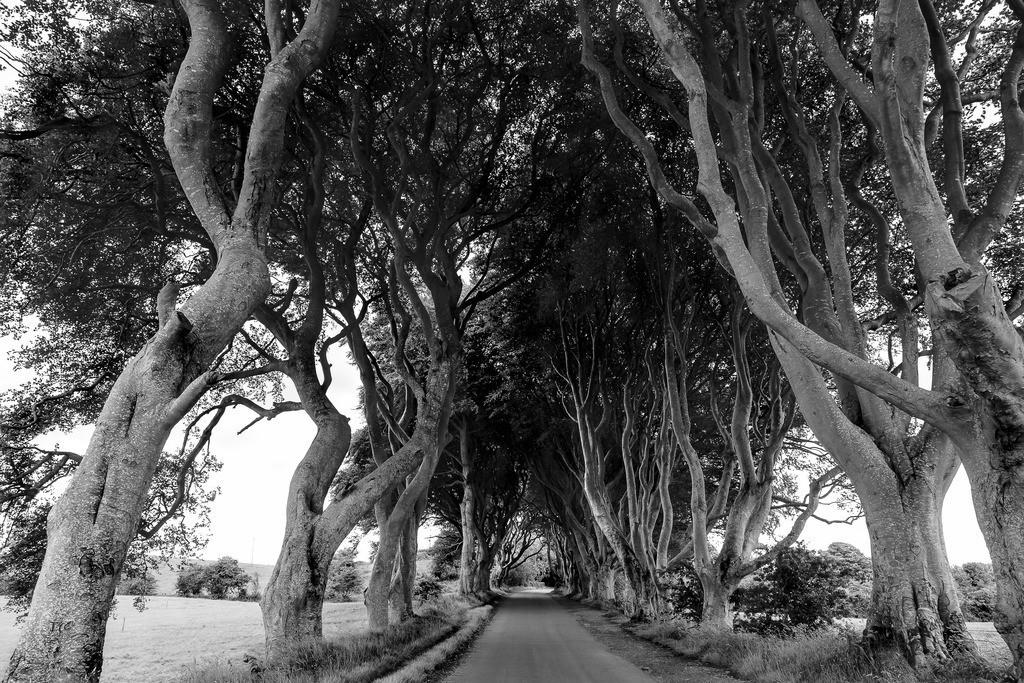 Baum Alee   Baum Alee in Nordirland der immer grünen Insel
