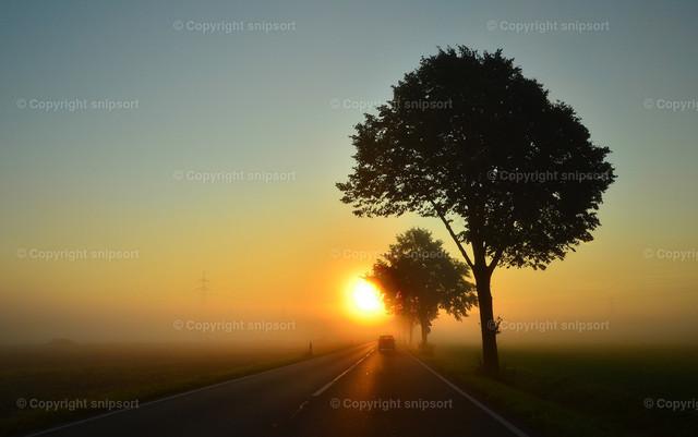 Nebel im Verkehr | Eine vernebelte Landstraße mit aufgehender Sonne