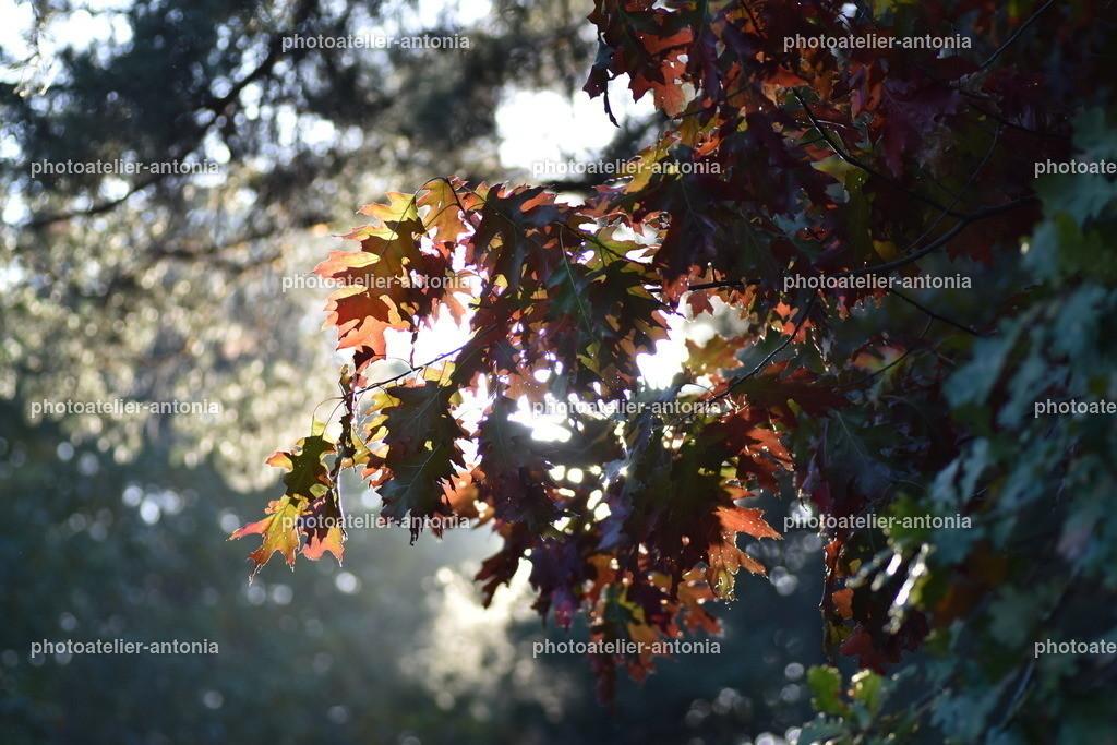 Herbstblätter III