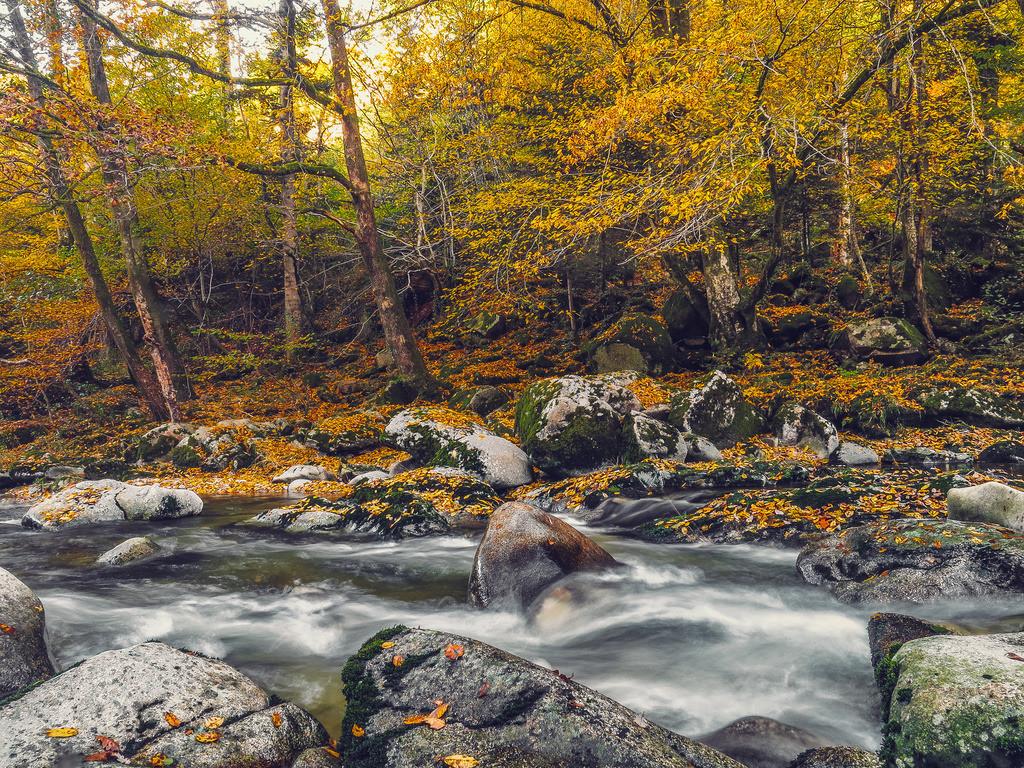 Herbstliche Murg   Flusslauf der Murg im Nordschwarzwald