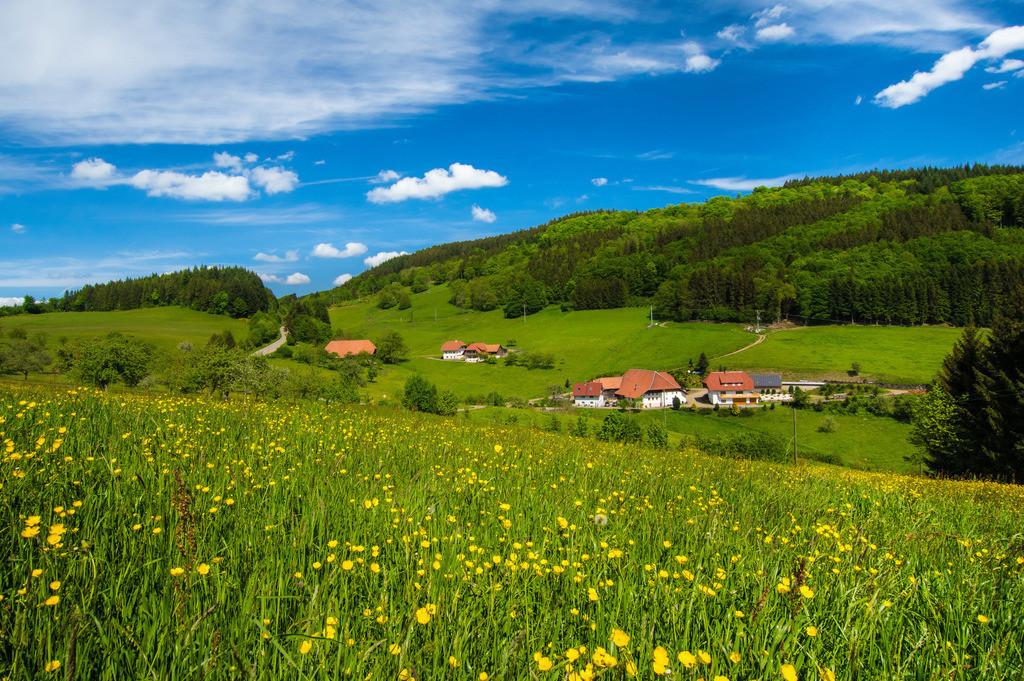 Am Geisberg | Schwarzwaldydille am Geisberg im oberen Schuttertal