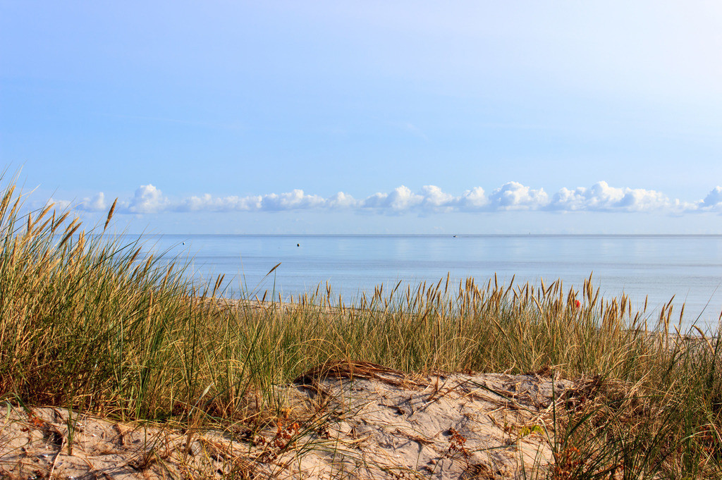 Schubystrand im Sommer | Strandhafer am Sandstrand in Schubystrand