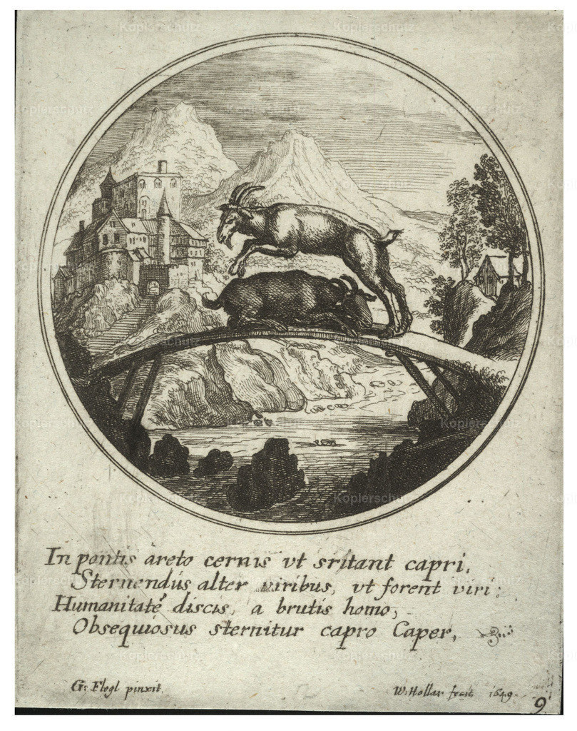 Wenceslas_Hollar_-_Two_goats__after_Flegl