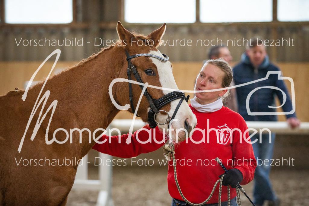 Freispringen-Pony-3j-41