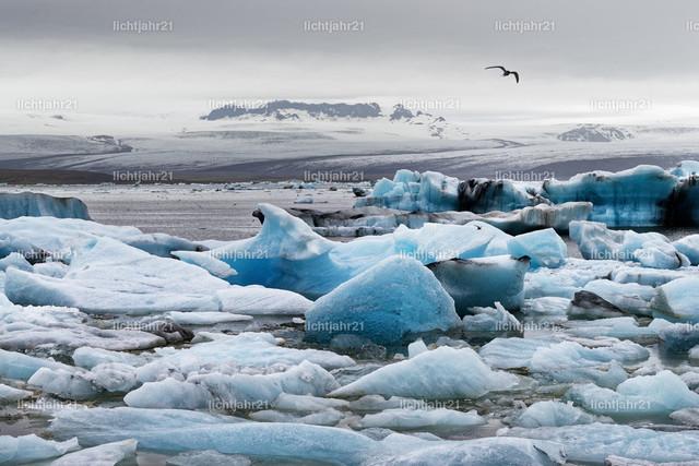 Eisformationen vor einem großen Gletscher | Gletscherlagune mit markanten Eisformationen, Eisberge in Blautönen, großer Vogel am grauen Himmel als Silhouette, im Hintergrund als Kulisse ein gewaltiger Gletscher - Location: Island, Südküste, Gletscherlagune Jökulsarlon (Jökulsárlón)