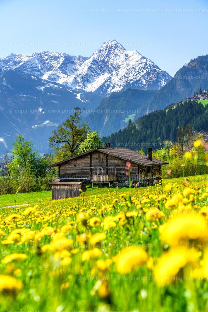 Frühling in Laimach im Zillertal-2