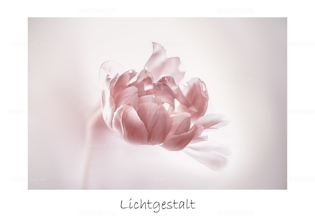 Light_max