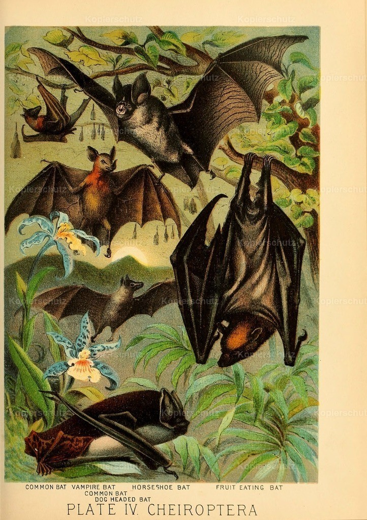 Johnson_s- Household-Book- of-Nature-1880-(5)