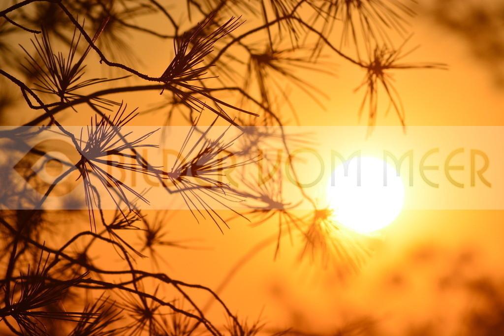 Bilder Sonne | Bilder Sonne Sonnenuntergang