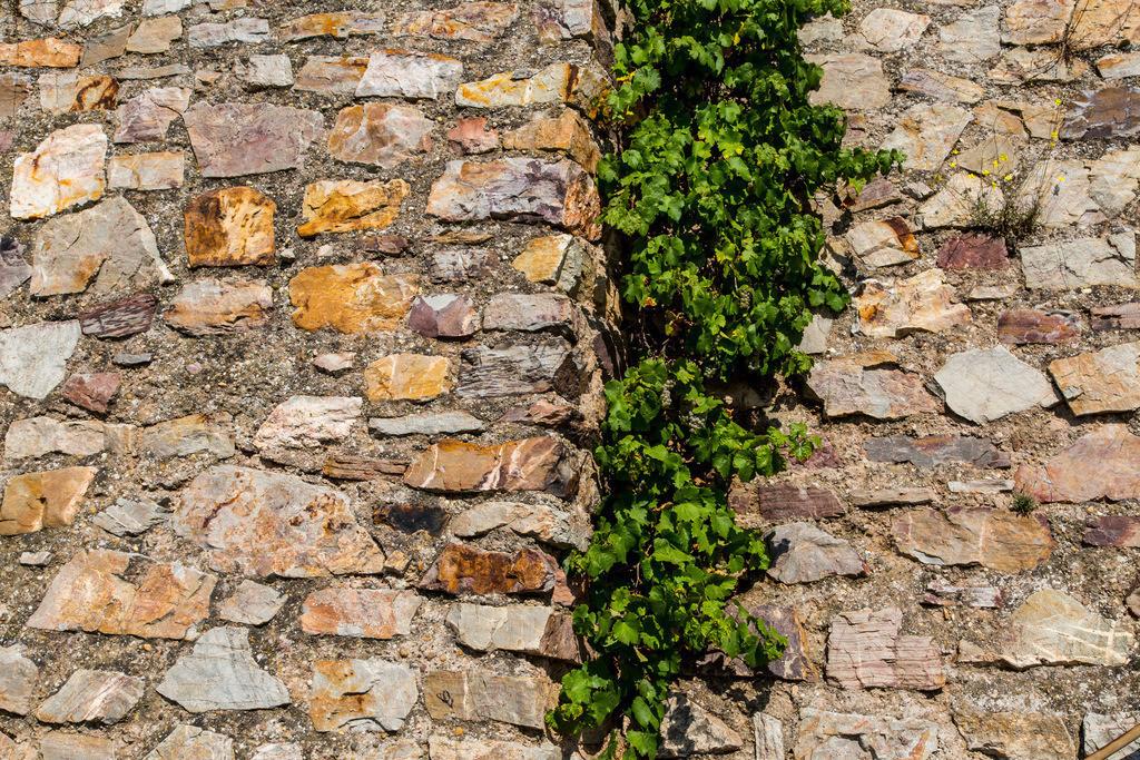 JT-150918-306 | Bruchsteinmauer in einem Weinberg,