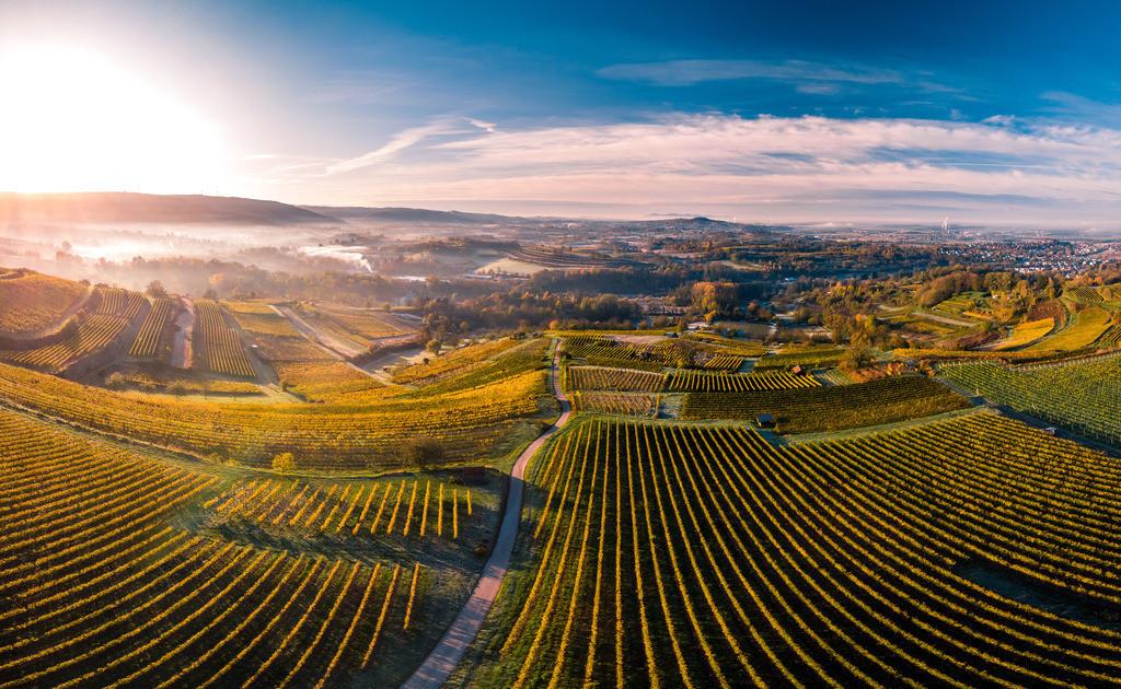Herbstmorgen bei Kippenheim | Herbstliche Morgenstimmung in den Weinbergen bei Kippenheim