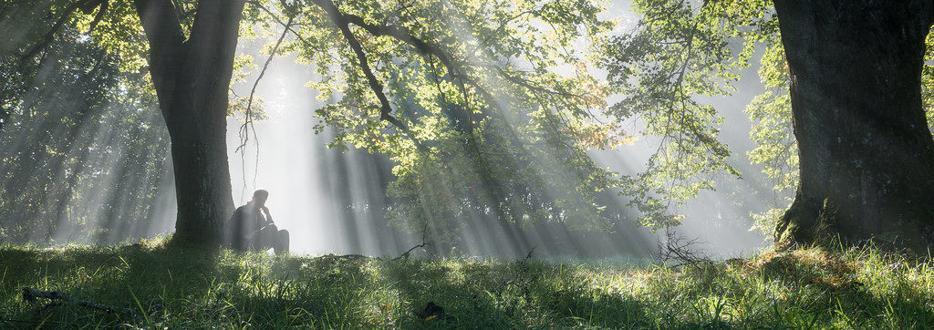 Nebelwald denkend | der perfekte Moment