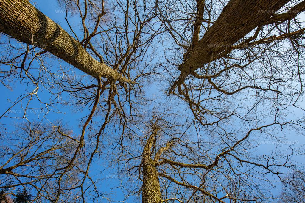 Spitzen | Baumwipfel