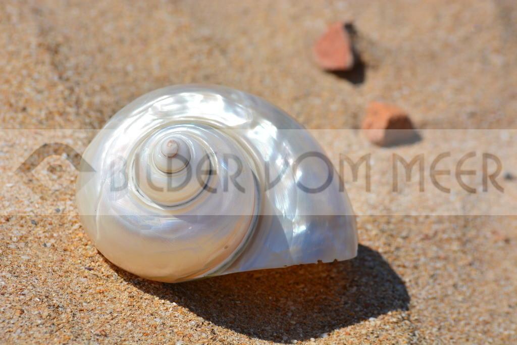 Muschel Bilder vom Meer | Muschelbilder im Sand