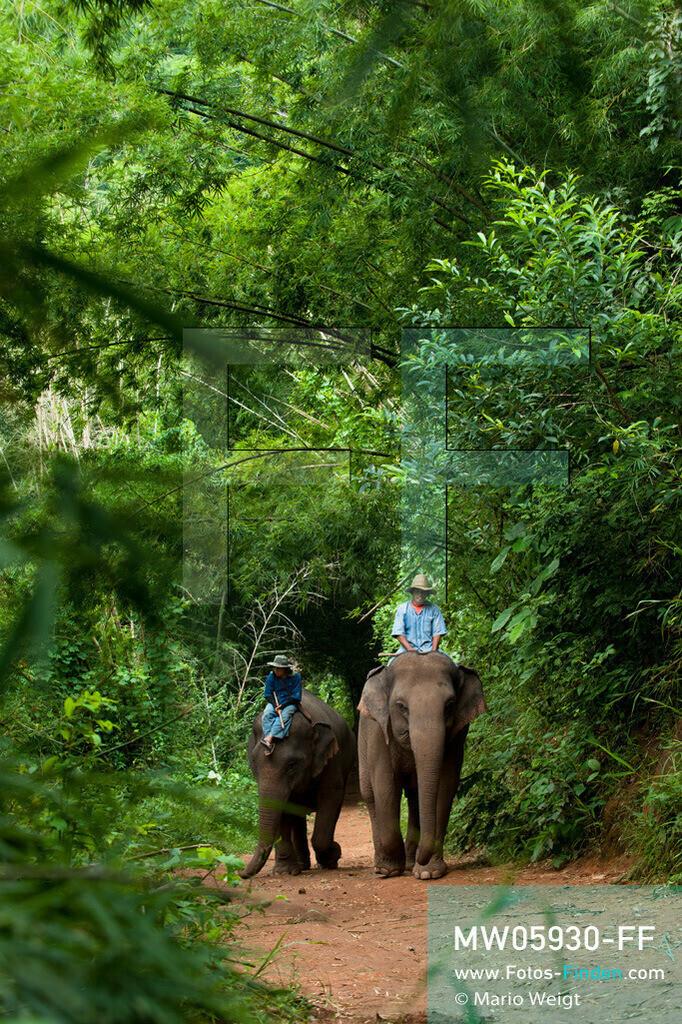 MW05930-FF | Thailand | Goldenes Dreieck | Reportage: Mahut und Elefant - Ein Bündnis fürs Leben | Mahuts auf ihren Elefanten im Dschungel  ** Feindaten bitte anfragen bei Mario Weigt Photography, info@asia-stories.com **