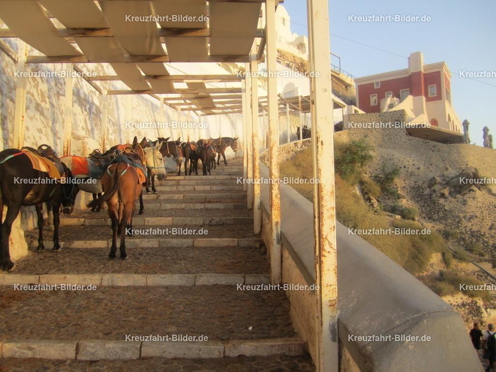 Eselpfad in santorini | Der Eselpfad in Santorini den man sich mit den Eseln teilen muss.