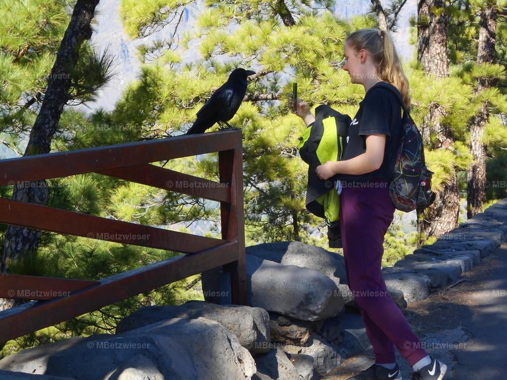 DSCN0270 | Tierische Begegnung auf der Cumbrecita
