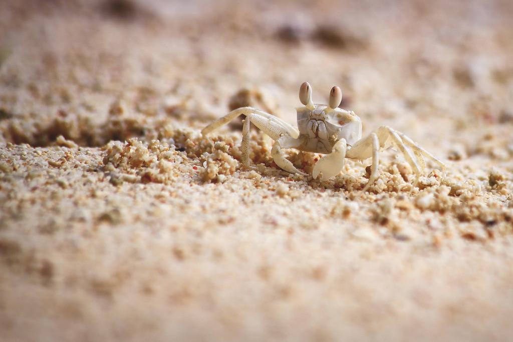 077-Seychellen-Krabbe